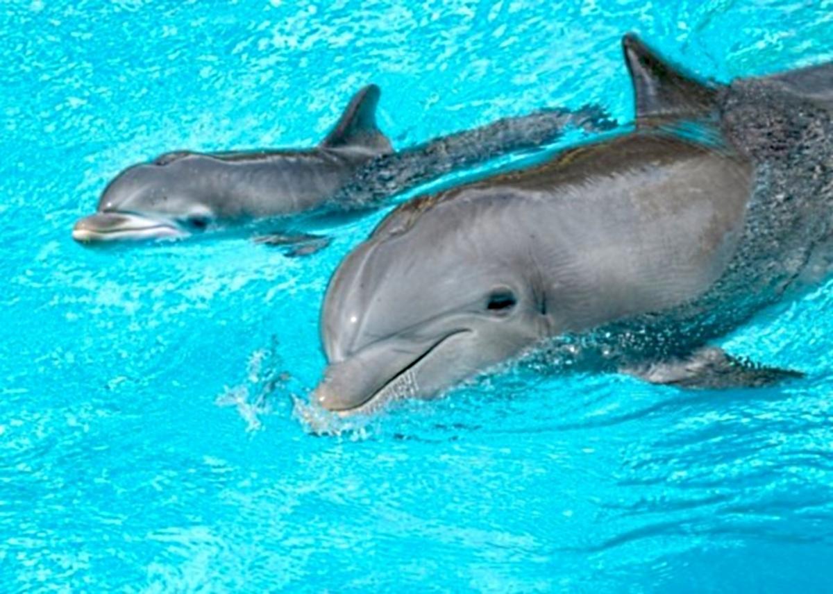 дельфины в анапе