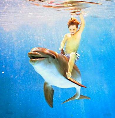 дельфинарий в анапе утриш